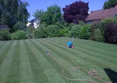 Professionenn verlegter Rasen durch den Fachbetrieb Gartenreich Patrick Schwab in Landau/Isar