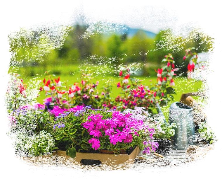 Der Fachbetrieb Gartenreich Patrick Schwab in Landau/Isar bietet professionelle Pflanzplanung an